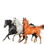 Lil Nas X, Billy Ray Cyrus & Diplo Old Town Road (Diplo Remix)